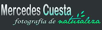 www.mercedescuesta.com