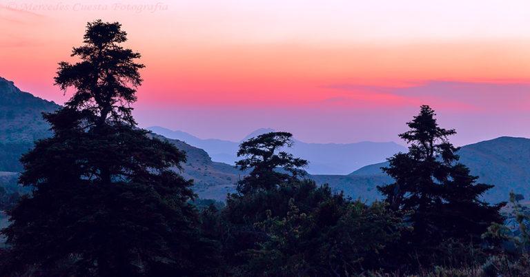 15_Pinsapo_trees_at_sunset
