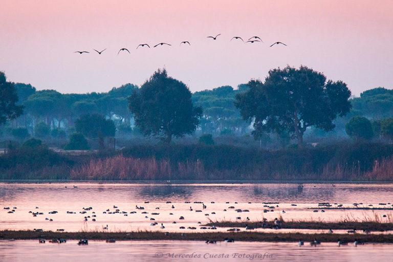 18_El despertar de Doñana