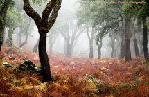 900_Alcornoque_niebla